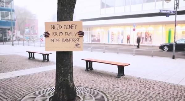 Oro Verde: gli Alberi chiedono aiuto!